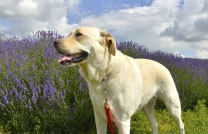 Herbal therapy for dogs